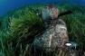 Гидрокостюм Cressi Tracina 7 мм для подводной охоты (штаны на лямках) 8