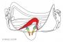 Маска Cressi Calibro для подводной охоты, белая 13