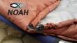 Спальный мешок универсальный Verus Nord Brown до - 10°C  3
