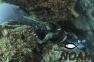 Гидрокостюм Cressi Scorfano 7 мм 2018  для подводной охоты (Без паяных швов) 5